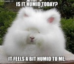 """""""Not Enough Humidity"""" Said No OneEver"""